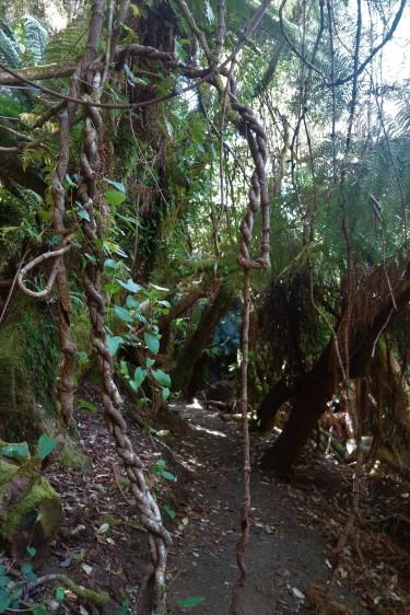 Blue Tier Giant Tree Walk